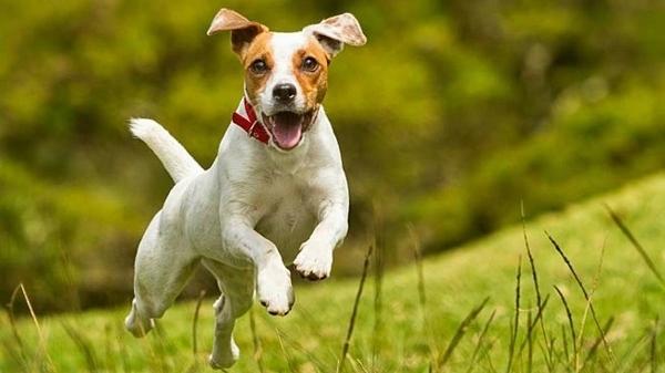 Tras el Camino de Santiago, tanto tú como tu perro regresarán de las vacaciones mucho más relajados.