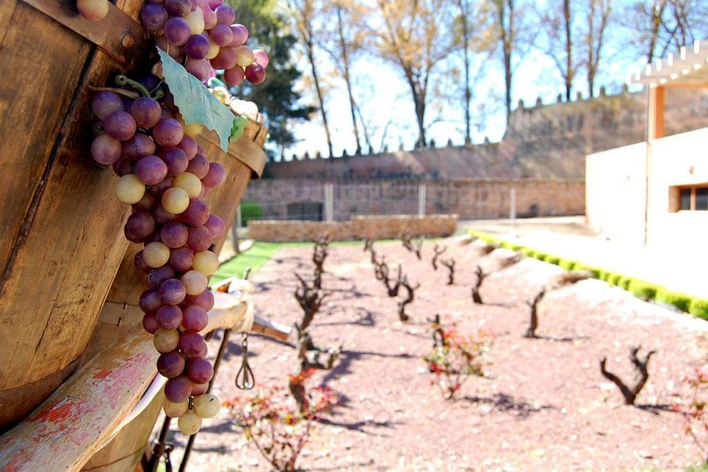 wine in the Camino de Santiago