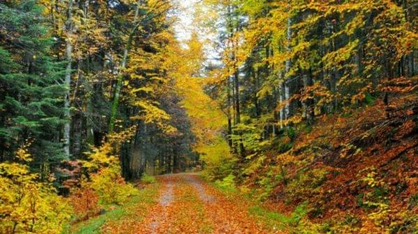 Uno de los bosques en Navarra