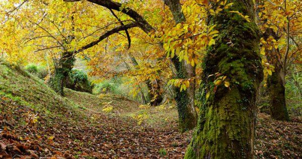 El Camino Lebaniego en otoño