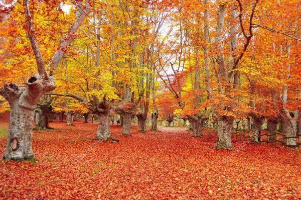 Camino de Santiago desde Sarria en otoño