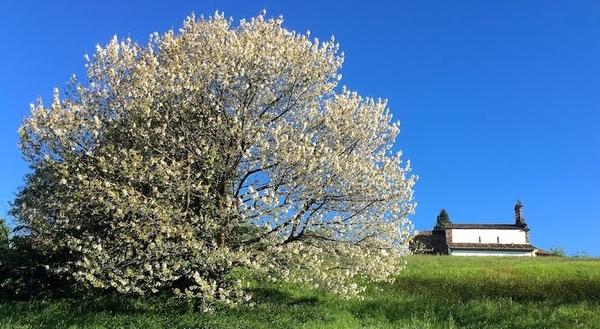 Primavera Camino Primitivo