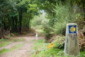 camino de santiago with a dog