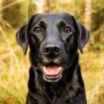¿Quieres hacer el Camino de Santiago con tu perro? Te damos algunos consejos