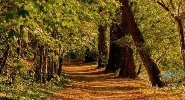 El Camino de Santiago en otoño