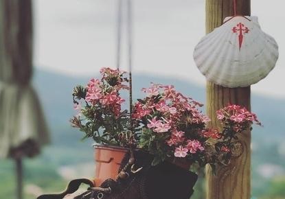 hacer-camino-santiago-en-primavera