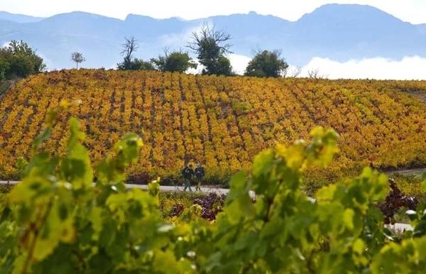 En otoño podrás presenciar el cambio de color de los viñedos que tienen gran presencia en el Camino Francés.