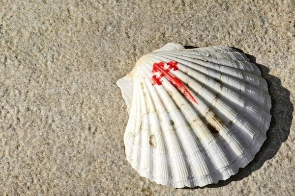 La concha de vieira se ha convertido en un auténtico símbolo del Camino de Santiago y en un emblema para el peregrino.