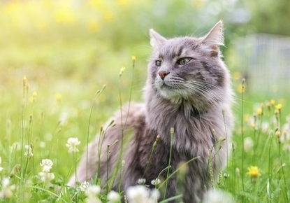 hacer-Camino-Santigo-gato-felino-minino