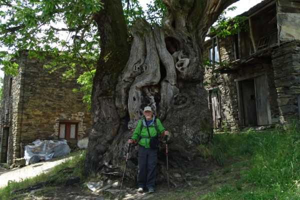 Isidre en un árbol en el Camino. Foto tomada por Isidre