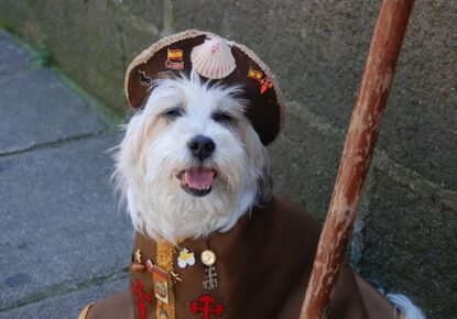 Hund-jakobsweg