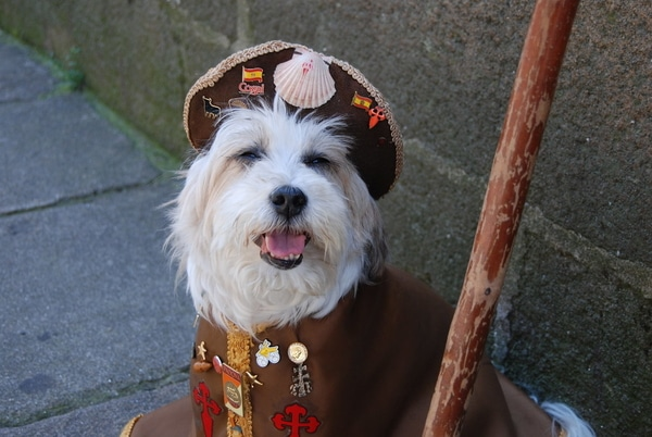 Hund als Wanderer verkleidet auf dem Jakobsweg