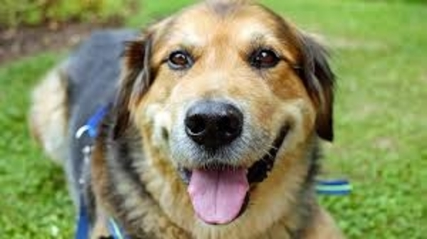 Glücklicher Hund auf dem Jakobsweg