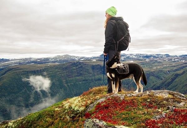 Urlaub auf dem Jakobsweg mit Hund