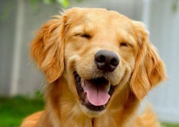 Ziele, um mit Ihrem Hund auf dem Jakobsweg zu reisen