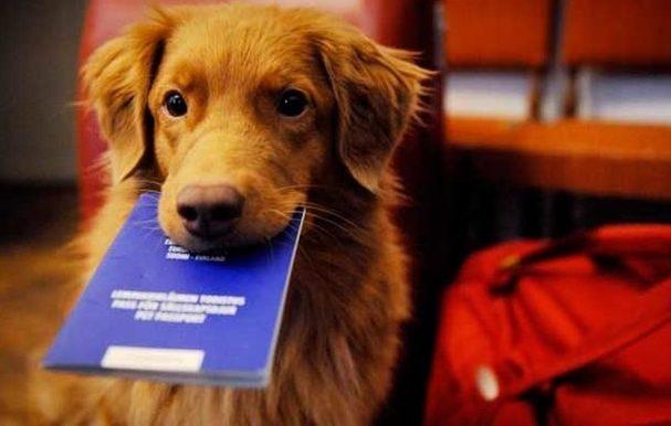 Was Sie im Rucksack für Ihren Hund auf dem Jakobsweg mitnehmen sollten