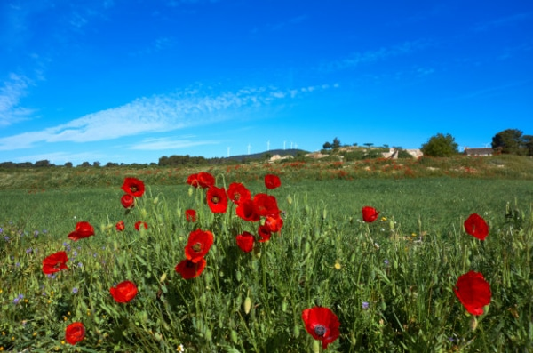 Spring is considered one of the best times to complete the Camino de Santiago.