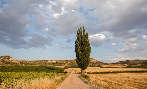 Jakobweg-Madrid-Etappen