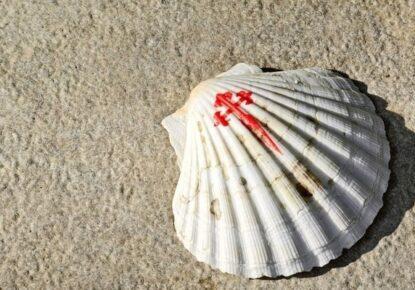Shell Scallop, Camino Santiago