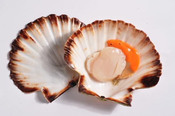 The pilgrim's shell as a souvenir