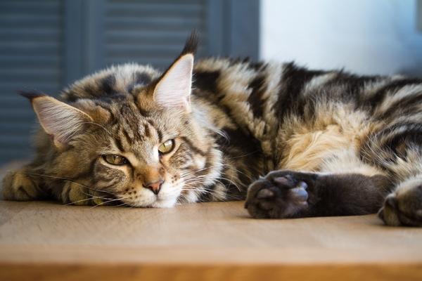 Nachteile, die es hat, Ihre Katze mit zum Jakobsweg zu nehmen