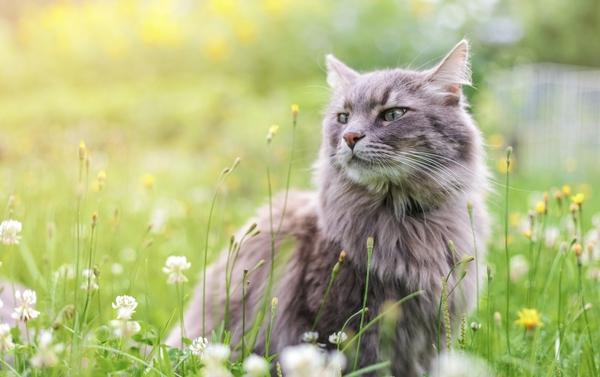 Jakobsweg mit Katze